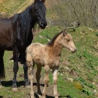 Faro 1 mois et son père Inal