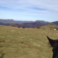 troupeau de montagne
